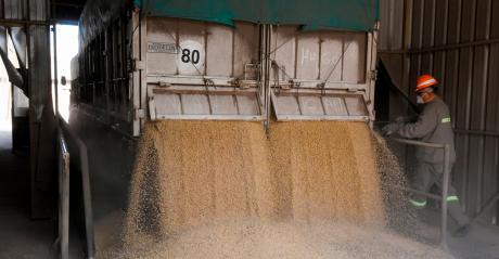 Unloading grain - man at back of truck with grain pouring out back of truck.