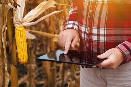 man iusing tablet in corn field.jpg
