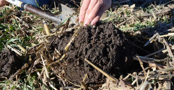 Investing in soil health pays off
