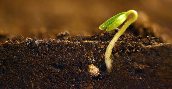 5 microbes your soil needs for success