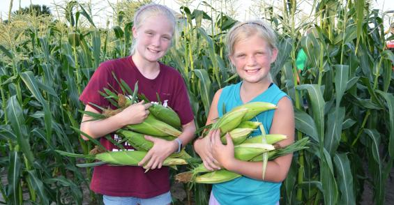 Tiny tycoons dominate sweet corn sales in small town