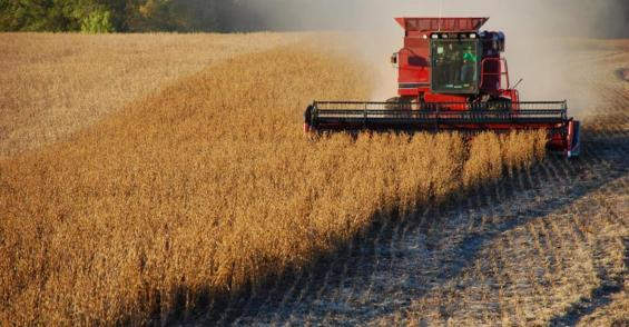 Farmland values remain steady in Midwest