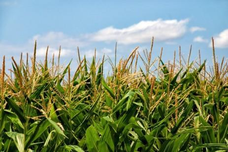5 Agronomic stories you don't want to miss