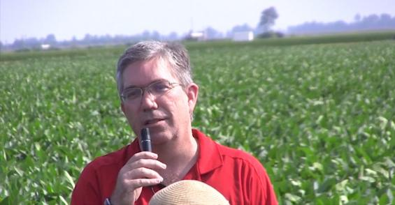 Soybeans 'a good place to start' with cover crops