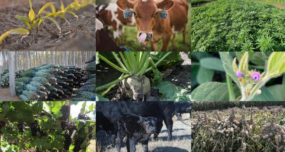 National Ag Day 2021: Celebrating U.S. agriculture