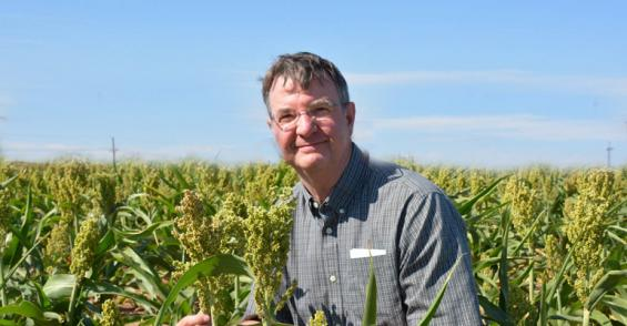 Double cropping: Will atrazine control volunteer wheat in sorghum?