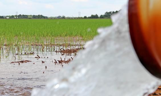 Exciting time to be a rice farmer