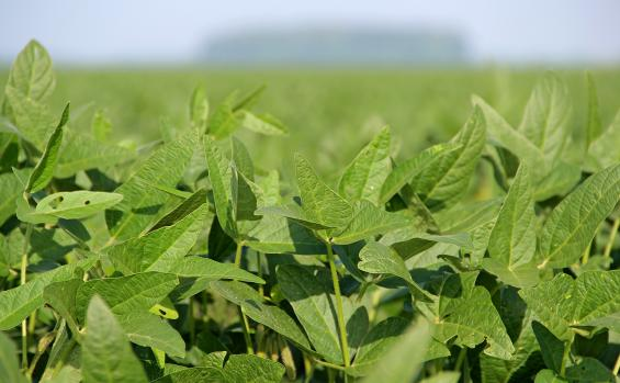 Looking for an edge in soybean production