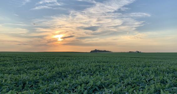 Farmland prices increase with competitive bidding