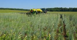 crimping cover crop