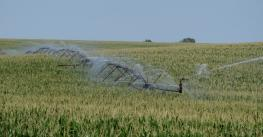 A new Nebraska study has quantified the benefits of irrigation among nine U.S. crops by analyzing yields from 1950 to 2015