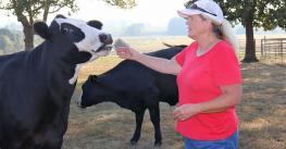 Marcia Moreland lets a cow lick her hand