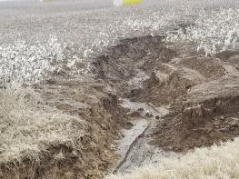 Erosion in a cotton field