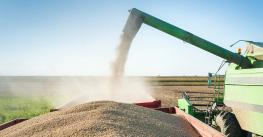 Soybean pouring from combine into waiting truck.
