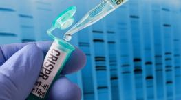 gene or genome editing CRISPR_Bill Oxford_iStock_Getty Images-959053706.jpg