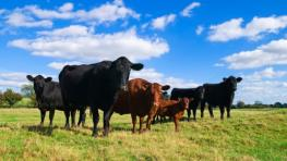 U.S. secures more access to EU beef market