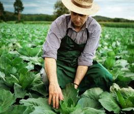 Immigration reform among Organic Farmers Association policy priorities