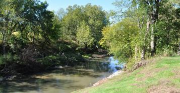 stream with trees