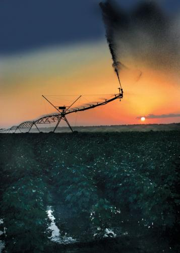 Irrigation Sunset