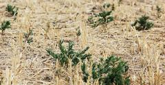 The Upside of Drought: Less Time Spent Controlling Weeds