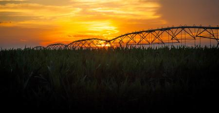 irrigation at sunset
