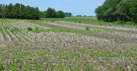 unplanted field with corn residue