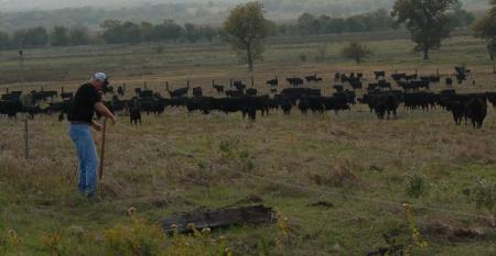 A single herd on a southern Oklahoma ranch