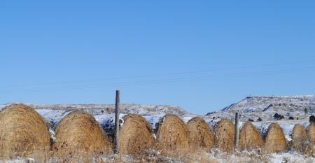 Bales of hay in field with dusting of snow on them