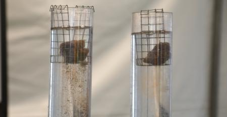 two tubes filled with water with a clump of soil at top of each tube