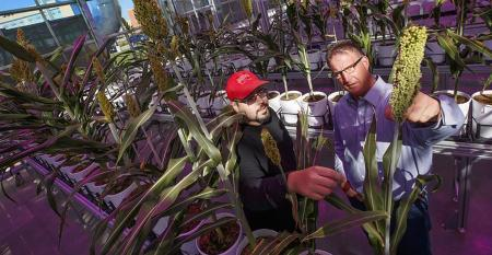 Nebraska's James Schnable (left) examines a sorghum plant with Andy Benson in the Greenhouse Innovation Center
