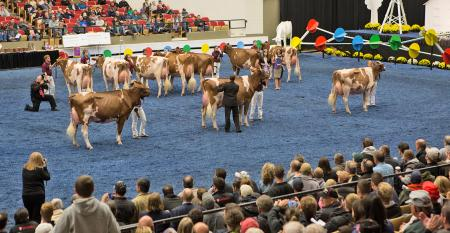 World Dairy Expo show ring