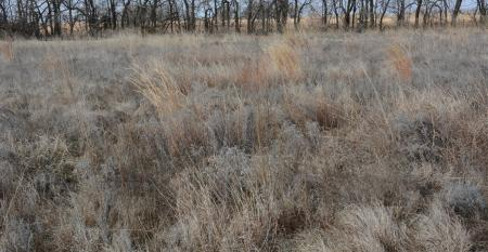 Old forage in winter