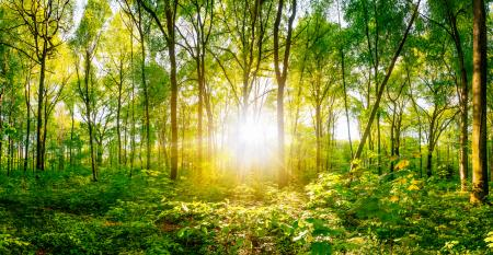 sunshine in forest