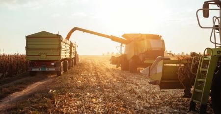 Machines harvesting corn on a sunny field.