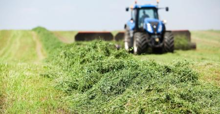A tractor is towing a merger on a cut alfalfa (hay) field.