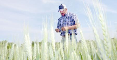 DFP-RonSmith-Checking-Wheat.jpg