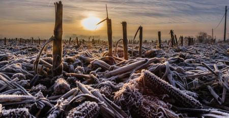 Field With Early Morning Frost