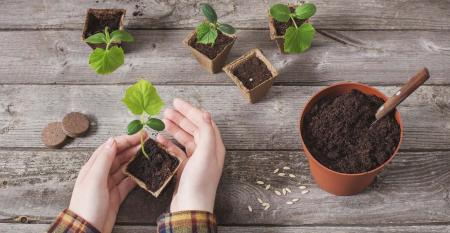 hand and cucumber seedlings on a wooden table