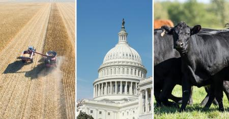 Collage with corn harvest, capitol building and angus beef cattle