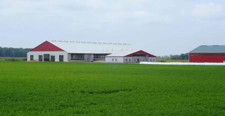 Red and white barns on green field