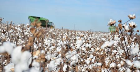 SWFP-HUGULEY-homeplace-harvest-cotton-18.jpg