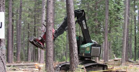 Hot saw working in woods