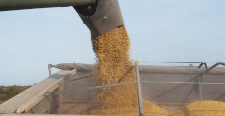 grain auger with grain being put in a hopper