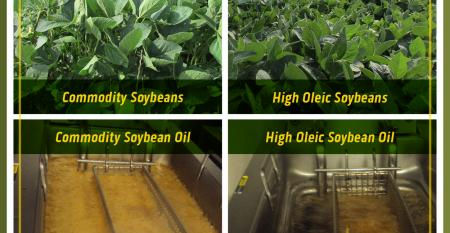high-oleic-soybean-commodity-soybean-oil-difference.jpg