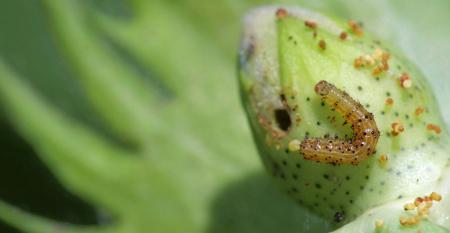 early-instar-kerns
