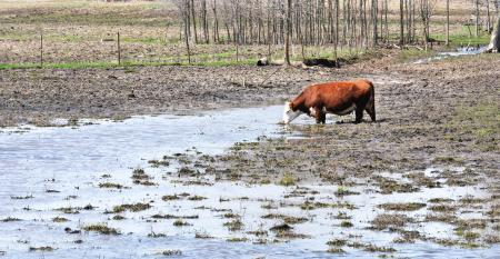 muddy-pasture-GettyImages-477028732.jpg