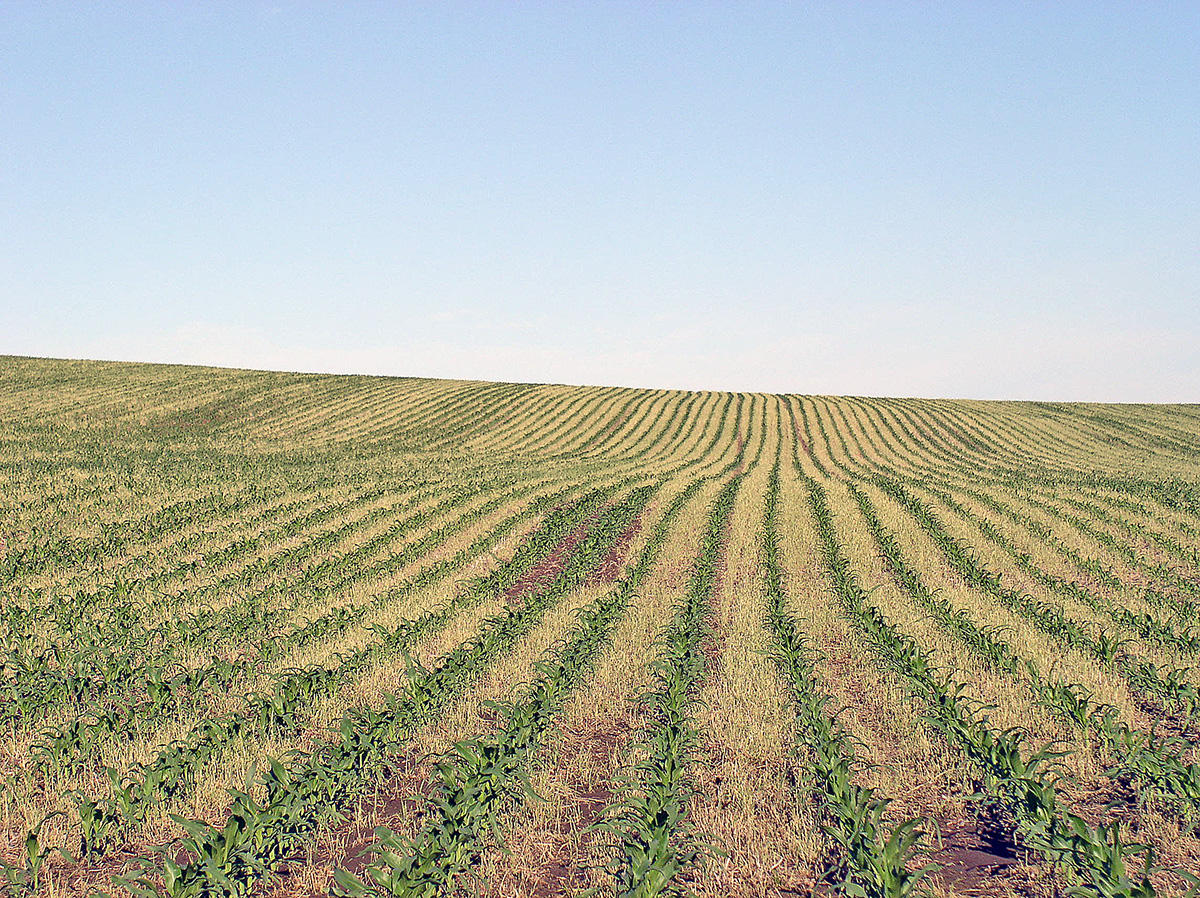 uniform crop emergence into cover crop residue